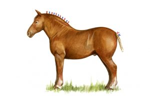Native horse breeds of Britain - Country Life