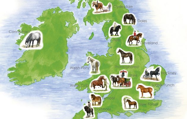 Native horse breeds of Britain