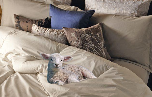 pure-wool duvet