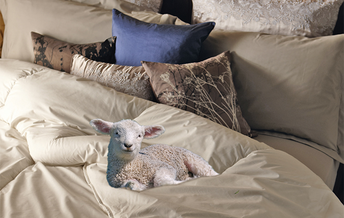 How To Sleep Like A Lamb The Benefit Of Pure Wool Duvet Country Life