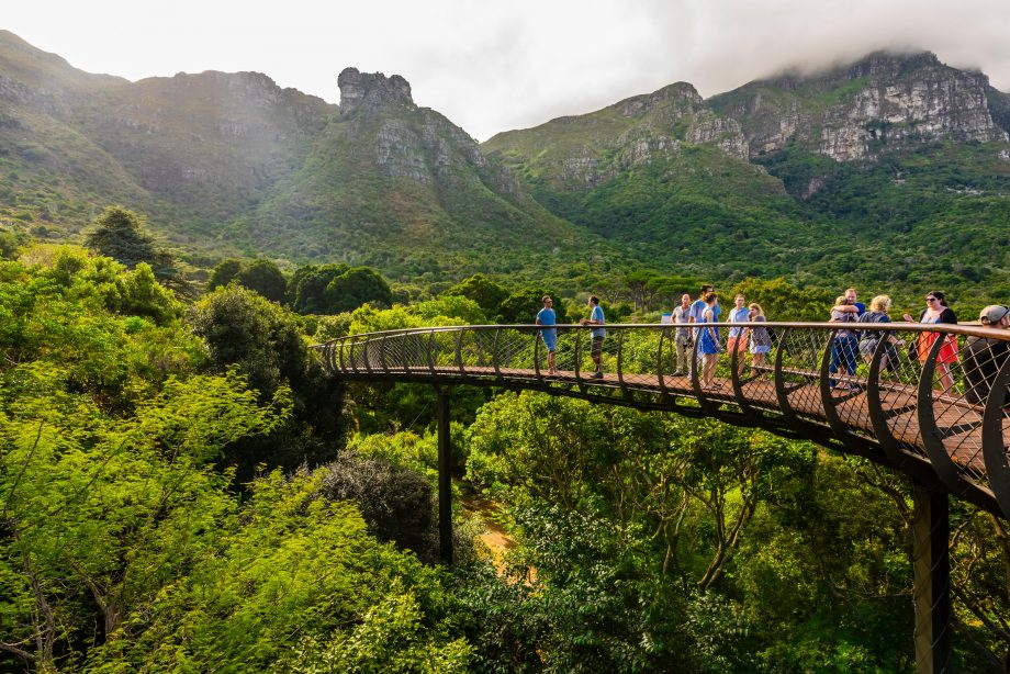 Tree Canopy Walkway, Kirstenbosch National Botanical Garden, Cape Town, South Africa, with Table Mountain in background.