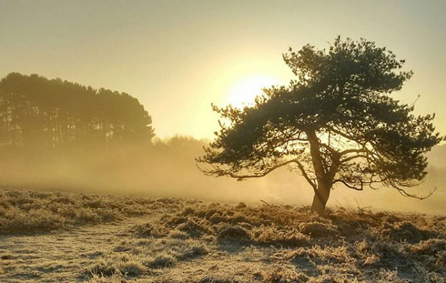 Frosty Britain - Juliette Newton
