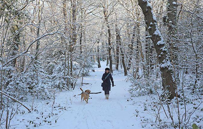 A woman walks her dog through snow in Sydenham Woods on February 28, 2018 in London, United Kingdom. Freezing weather conditions dubbed the 'Beast from the East' has continued to bring distruption to many parts of the country, with snow and sub-zero temperatures reaching much of the UK. (Photo by Dan Kitwood/Getty Images)