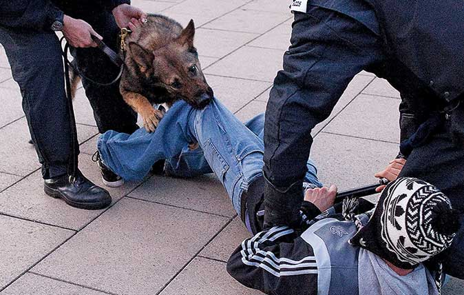 Police Dogs The Fearsome Law Enforcers Who Still Fit Into