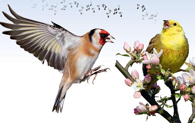 Birds singing / birdsong