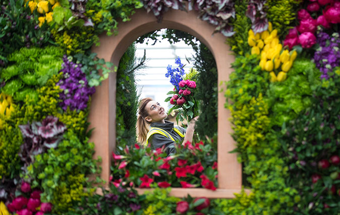 Live Flower Garden : Chelsea flower show how to watch on tv or get last