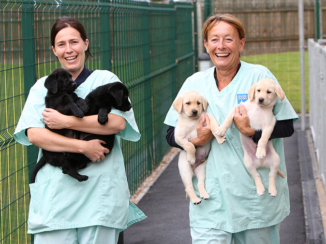 Guide Dog Rehoming >> The Seven Stages Of Life For A Guide Dog From Puppy To