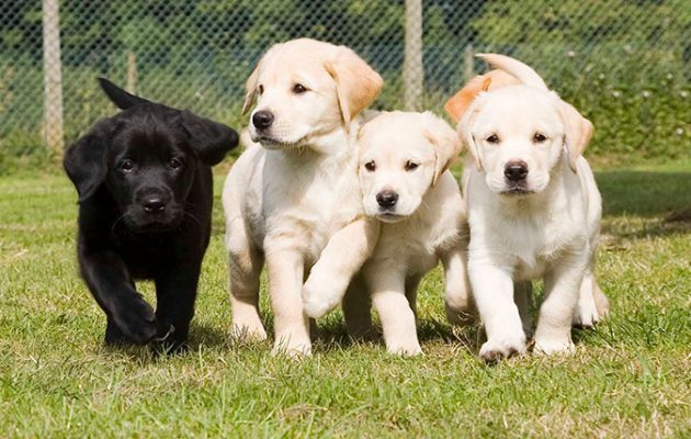 Funny Names For Seeing Eye Dogs
