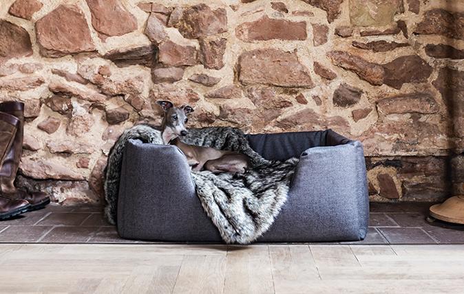 stylish dog beds
