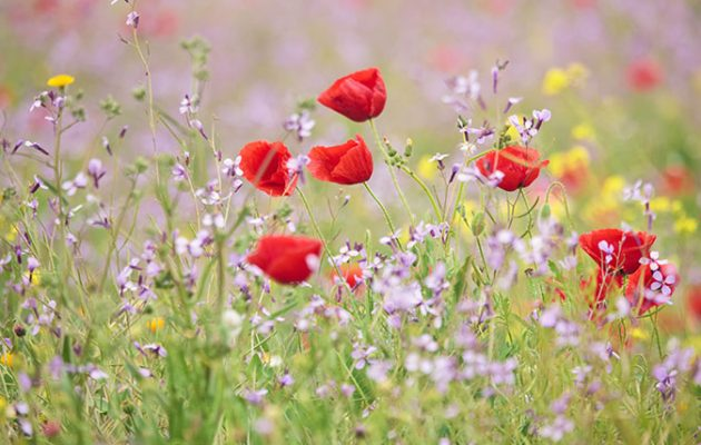 Wildflowers - or wild flowers - if you like