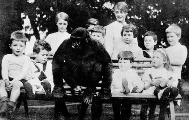 Johnny Gorilla