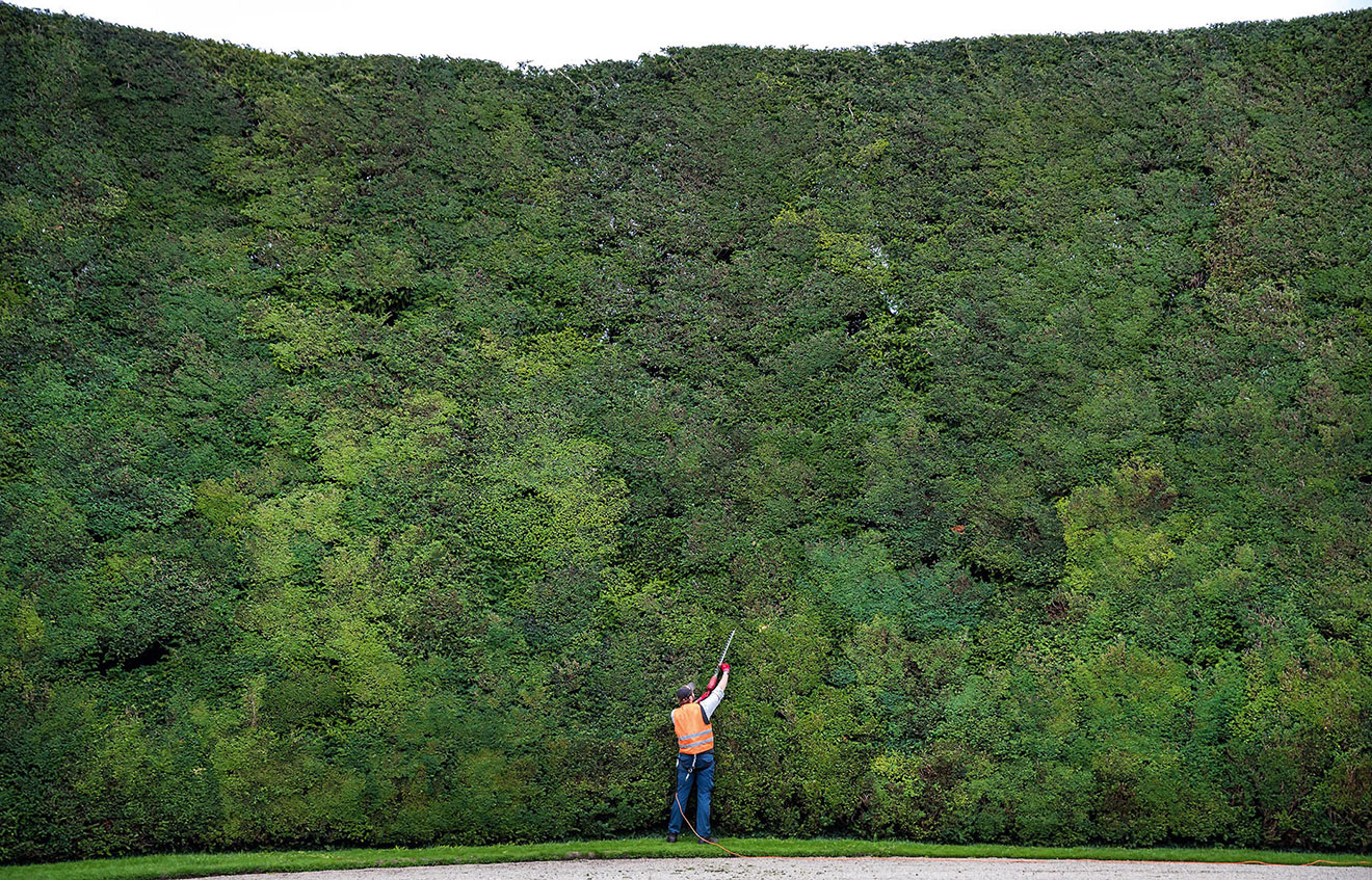 10 Pictures Of The World S Largest Yew Hedge Which Are