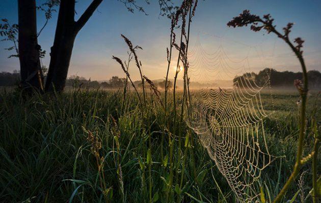 Dew on cobwebs at sunrise