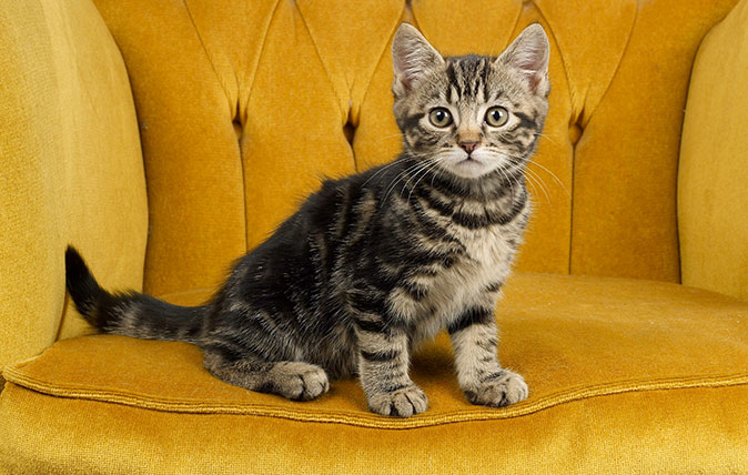 In praise of cats, our 'lithe, scrupulously clean and ...