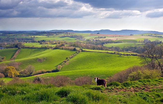 Waddon Hill, Dorset