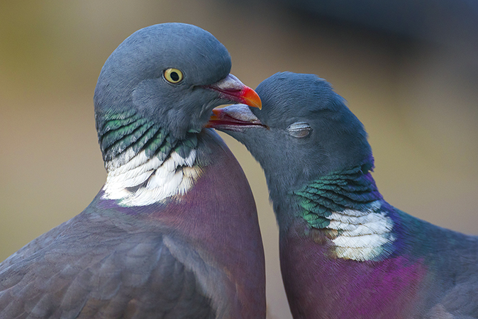 Why some birds mate for life – and why some play the field