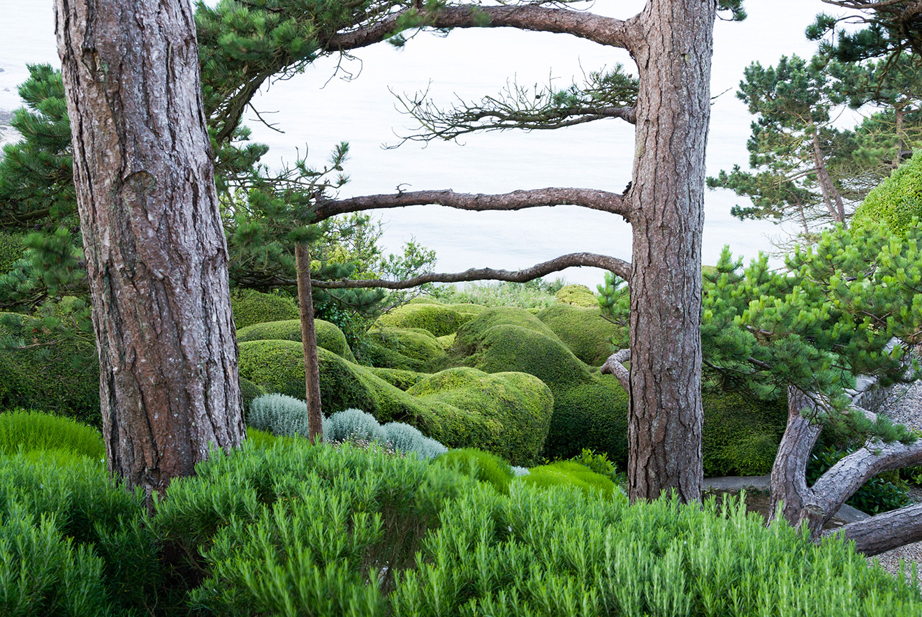 How To Do Topiary The Easy Way What To Plant How To Cut It Country Life