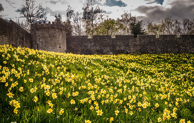 York city walls with daffodils in front