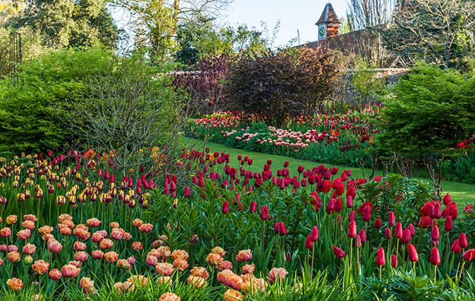 Pashley Manor Tulip Festival - John Glover / Alamy Stock Photo
