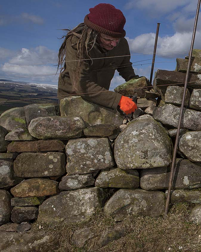 the dry stone wall builder every metre of wall contains a ton of