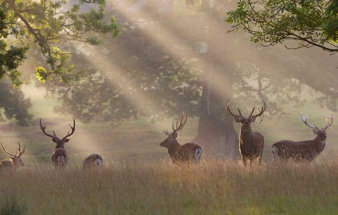 Deer stare out from a sun-drenched forest