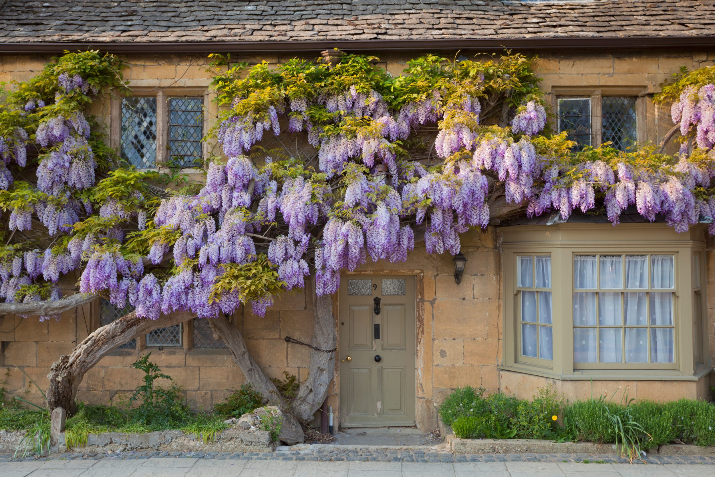 Alan Titchmarsh A Foolproof Guide To Growing Wisteria Country Life