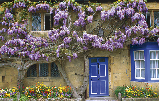 Alan Titchmarsh: A foolproof guide to growing wisteria