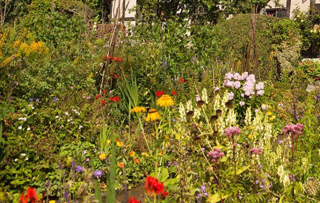 classic english country garden flowers - English Garden Flowers