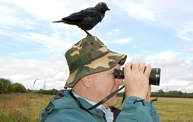 11 things you never knew about the jackdaw, the bird that just loves people