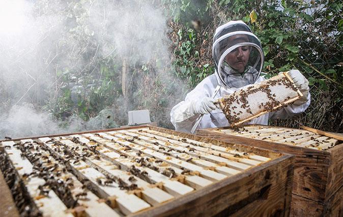 Beekeepr