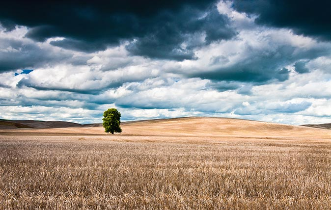 Tree in hay field with storm clouds