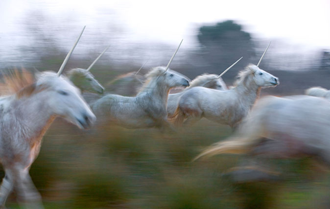 Unicorn herd. Image shot 2008. Exact date unknown.