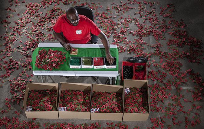 Living National Treasure - Poppy maker