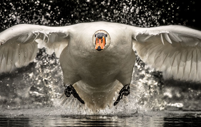 The magical beauty of Britain, shown at its very best by the British Wildlife Photography Awards