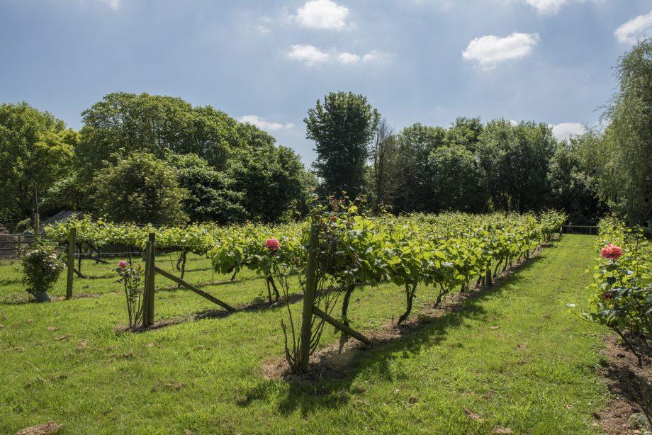 Tuckerton Farm