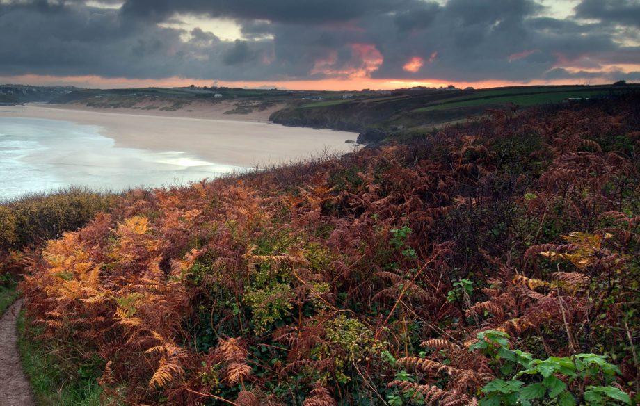 Ferns in the sunrise over Crantock Bay near Newquay on the North Cornish coast.