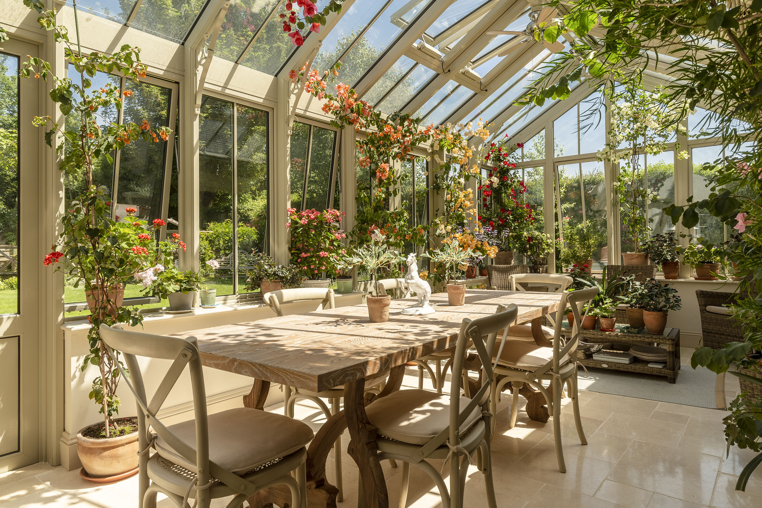 What to grow in a conservatory, from cacti and succulents ...