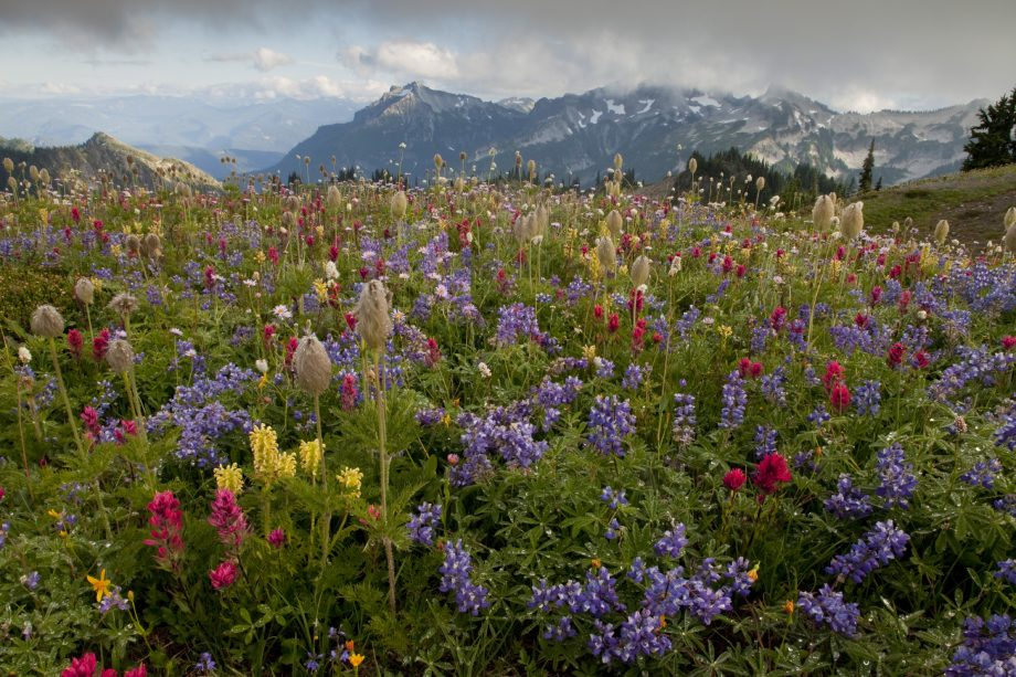 The world's greatest wildflowers: Where to find them and why they bring us so much joy - Country Life