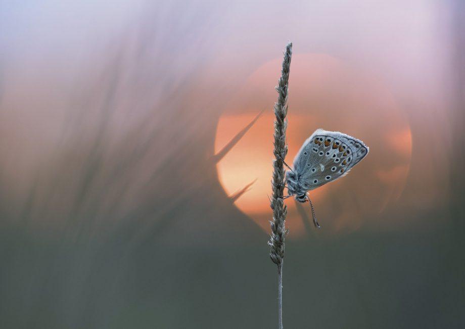©OPOTY/Anya Burnell