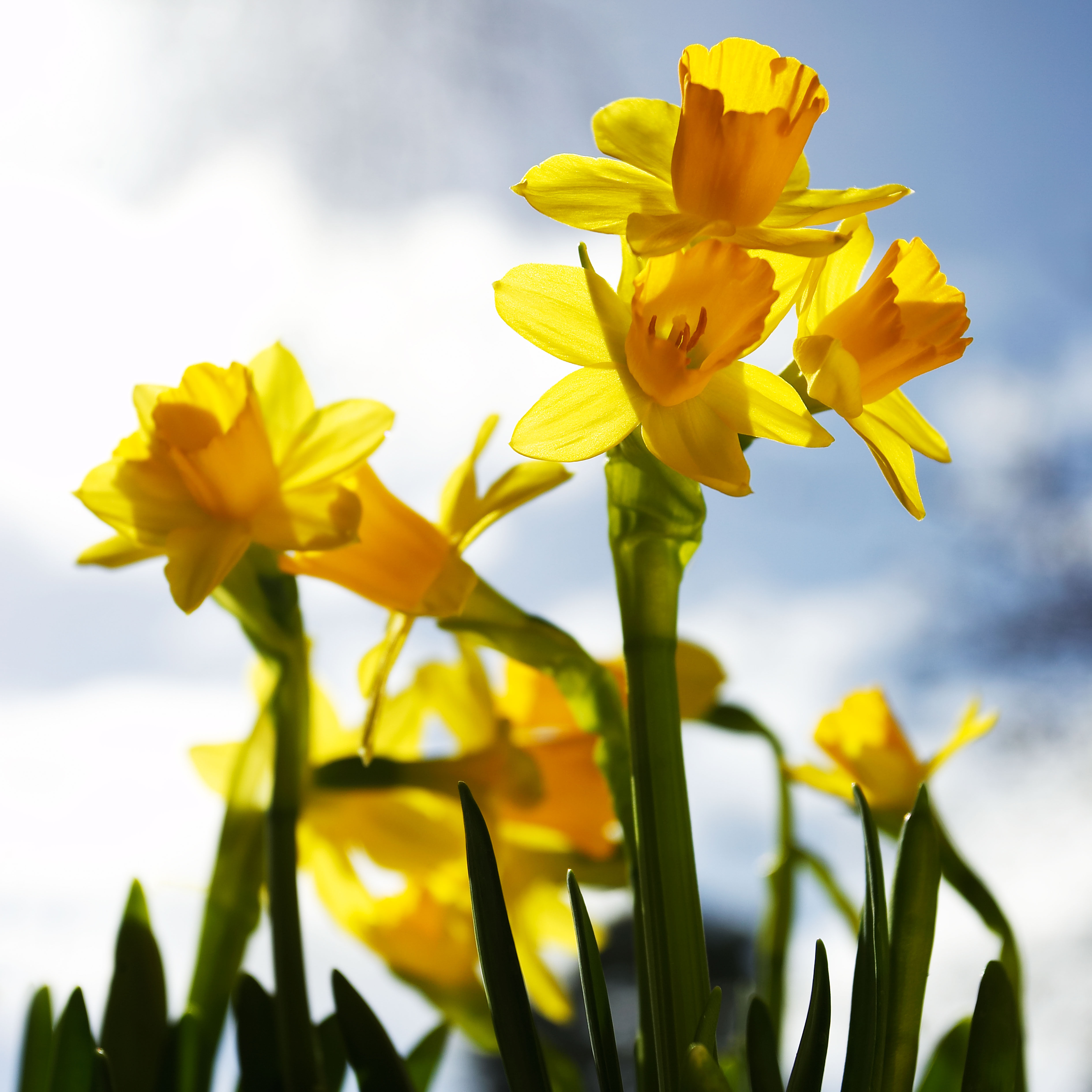 More Interesting Than Food Narcissus >> The Best Daffodils And Narcissi To Grow Your Garden Whether In Pots