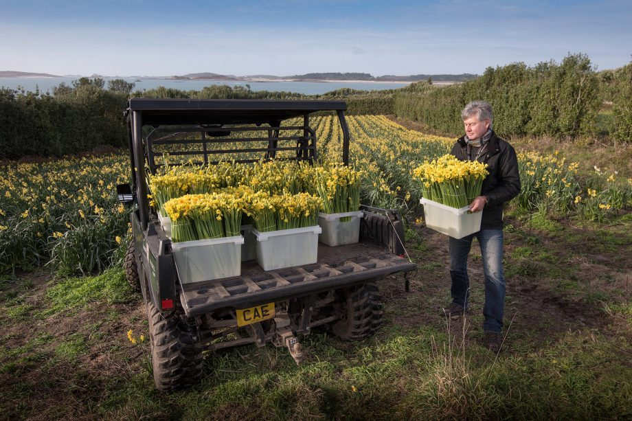 Narcissus and daffodil growers of the Scilly Isles
