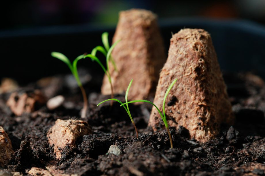 Jason Goodwin: How legginess, though desirable on humans, is the devil in seedlings
