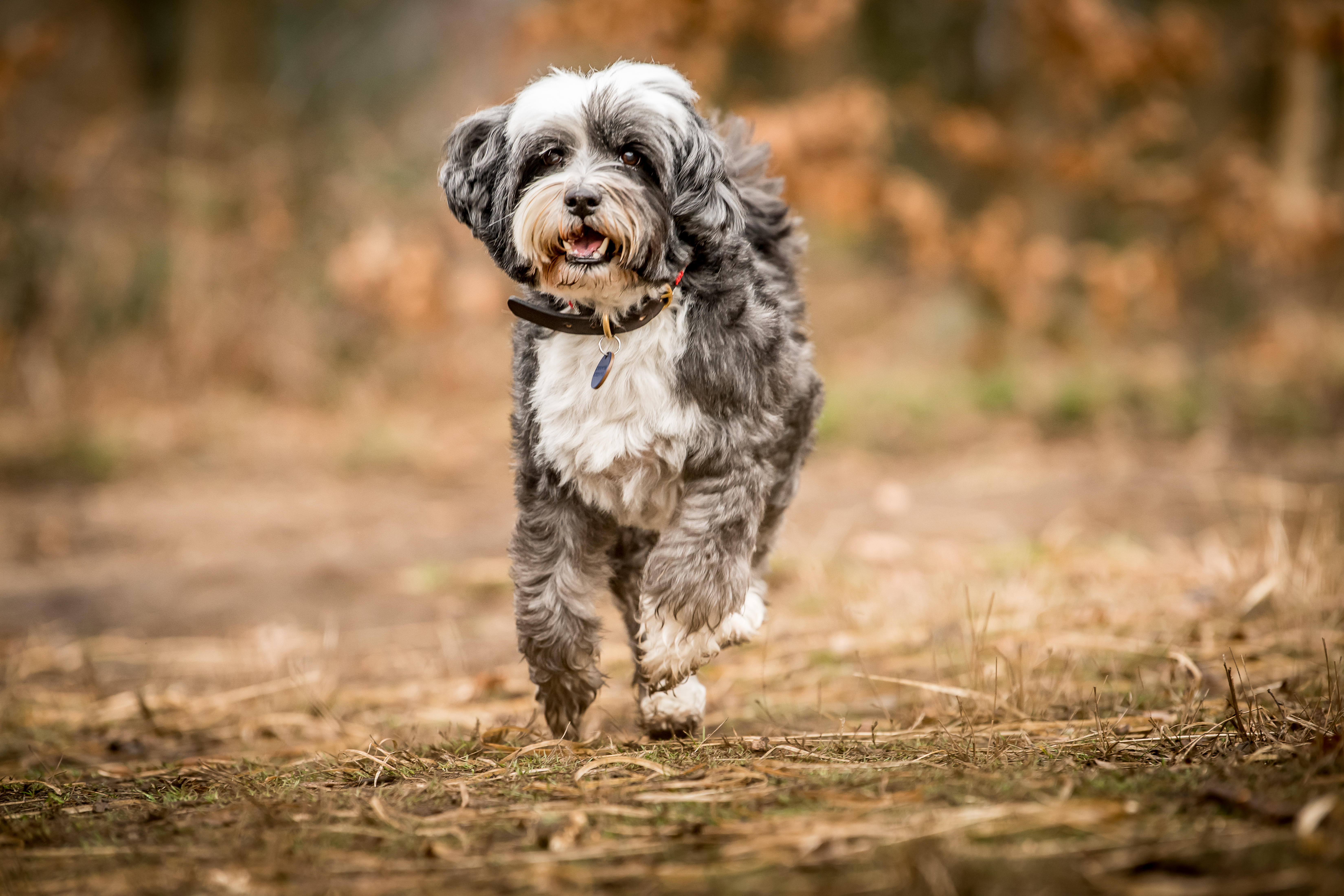 Tibetan Terriers Friend To The Famous