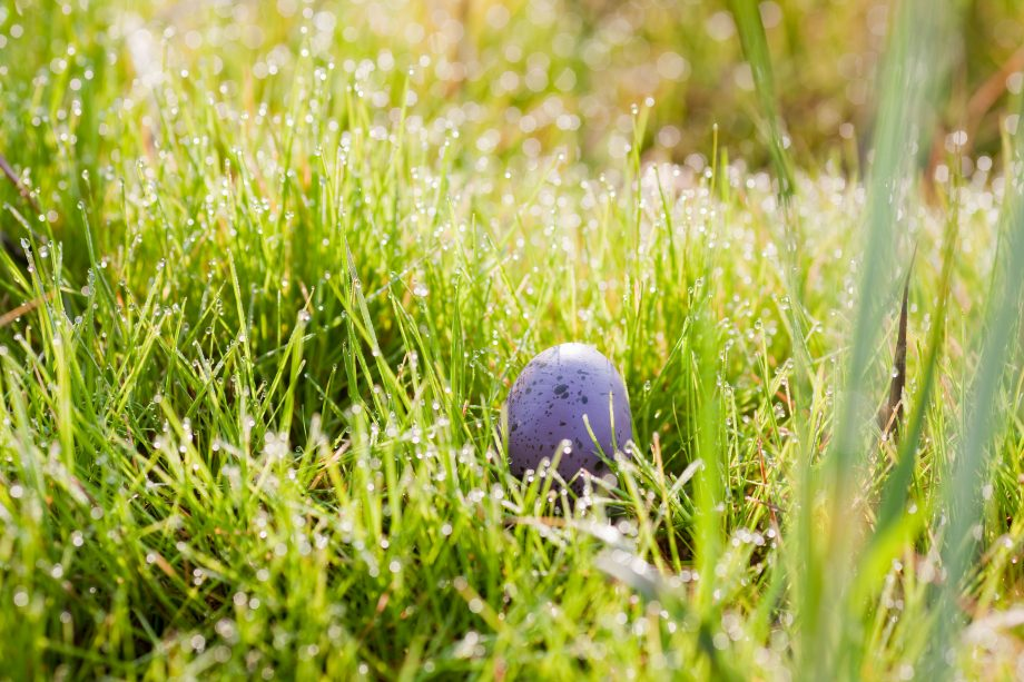 Egg hidden in long grass