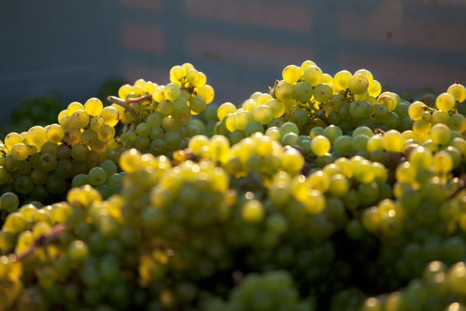 Home On Flipboard Corpus Christi Tx Plants Home Insurance