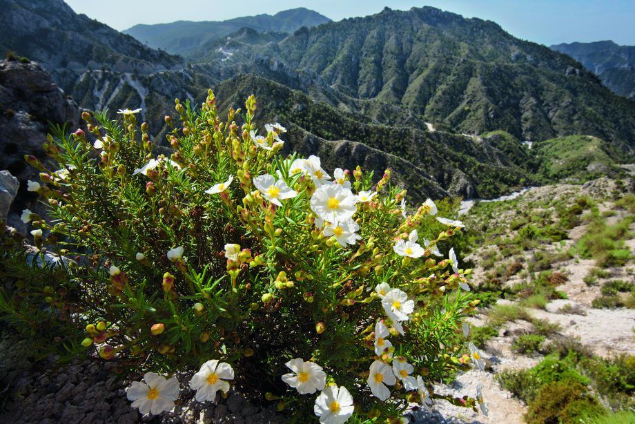 ringing the Mediterranean into your Garden: how to capture the natural beauty of the garrigue