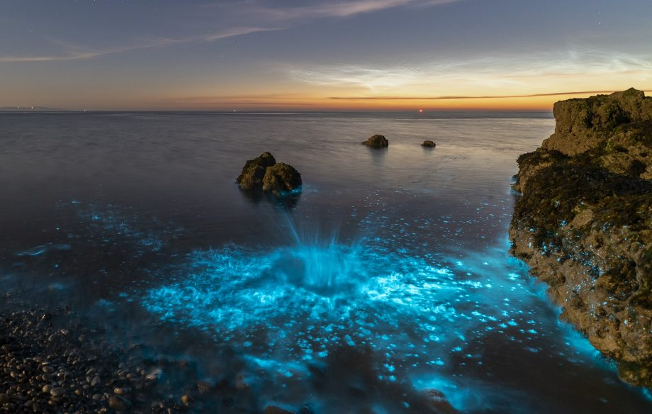 Bioluminescence Where To Go To See This Incredible Natural