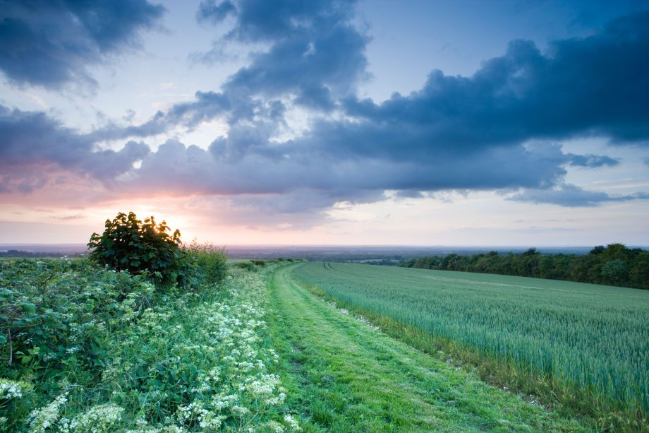 Field and hedgerow, North Downs at Clandon, Surrey, United Kingdom.