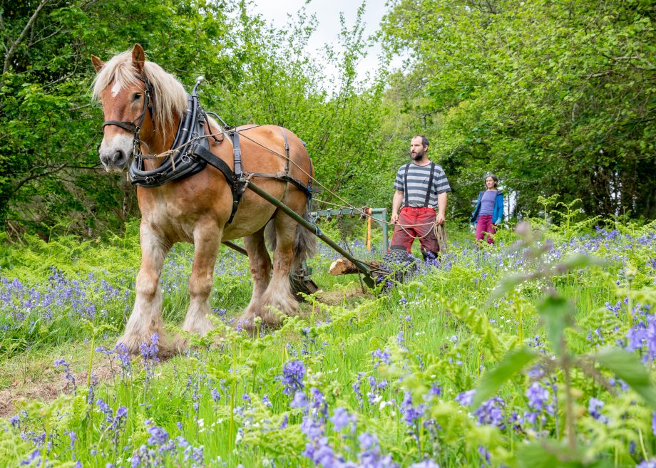 Meet the animals who sustainably work Britain's most beautiful woodlands
