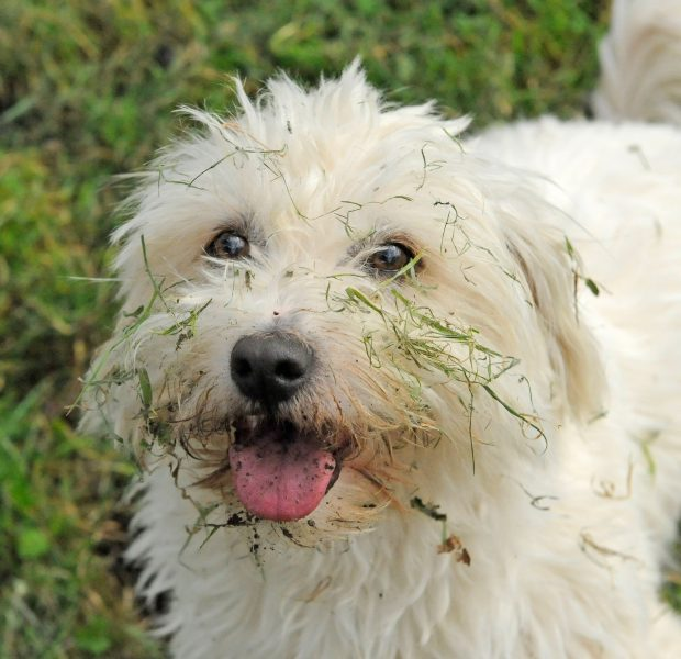 Dogs and animals - Country Life
